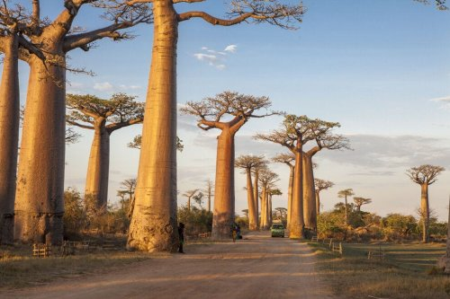 See the best of Madagascar on this photo tour