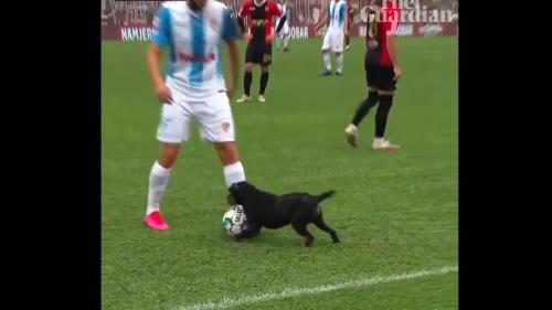 Der Ball ist Hund