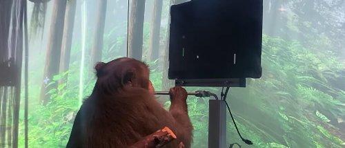 Elon Musk zeigt einen Affen, der mit Gedankenkraft Pong spielt