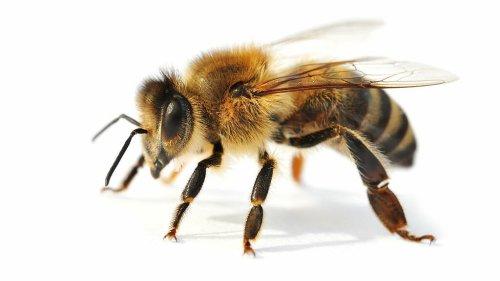 Mit Bienen und Drohnen gemeinsam gegen Landminen