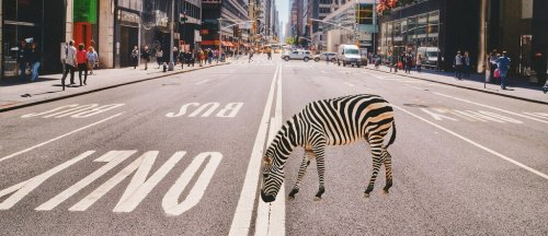 Weniger Einhörner, mehr Zebras: Wir brauchen Mobilitäts-Genossenschaften