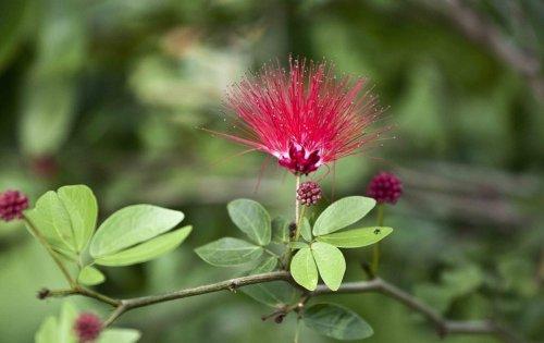 10 arbres qui conviennent parfaitement à un petit jardin