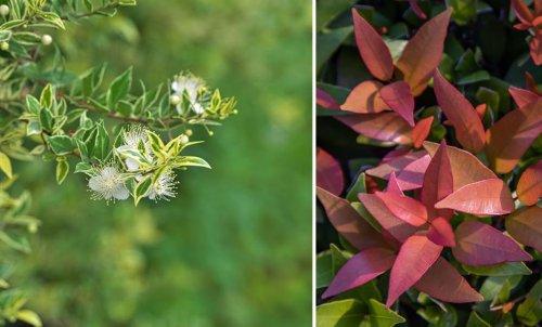 10 arbustes que l'on ne taille pas