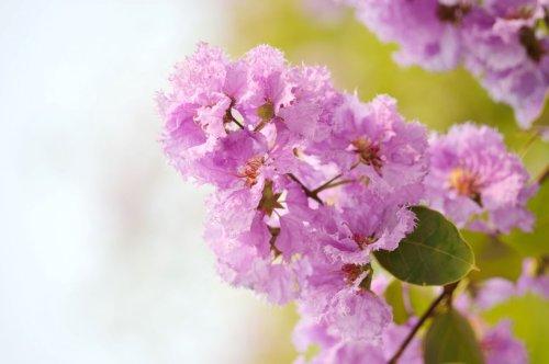 12 arbres ou arbustes parfumés à planter au jardin