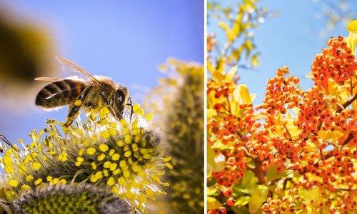 12 arbustes mellifères à planter pour aider les abeilles