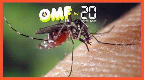 Moustiques : Non, il n'existe pas de « nouvelle sorte de piqûre » pouvant causer la mort
