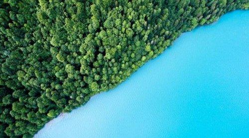 Environnement : Que sont les « solutions fondées sur la nature » et comment sont-elles mises en œuvre ?
