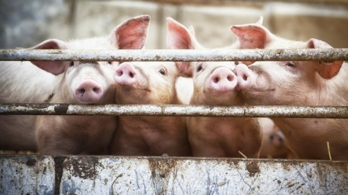 This Is the Worst Country in the World for Animal Rights