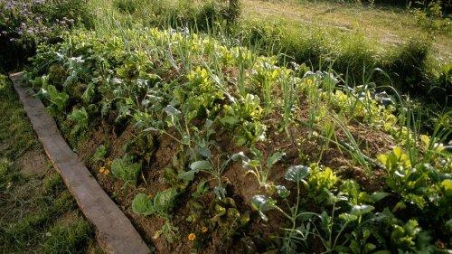 Hügelbeet anlegen: So bauen Sie sich das Hochbeet der Permakultur
