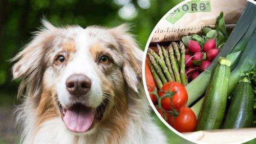 Hunde vegetarisch ernähren: Geldstrafen und sogar Haft drohen
