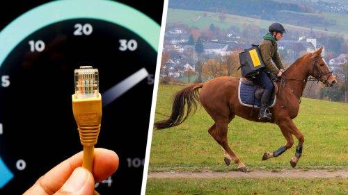 Datenübertragung: Pferd schlägt Internet um Längen