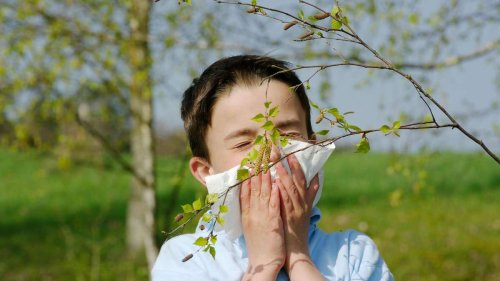Was ist eigentlich eine Kreuzallergie?