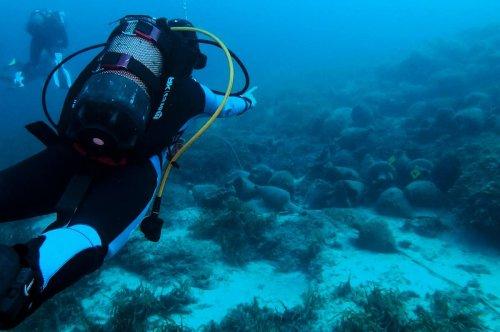 """Grèce : au musée sous-marin d'Alonissos, """"on plonge dans l'histoire"""""""