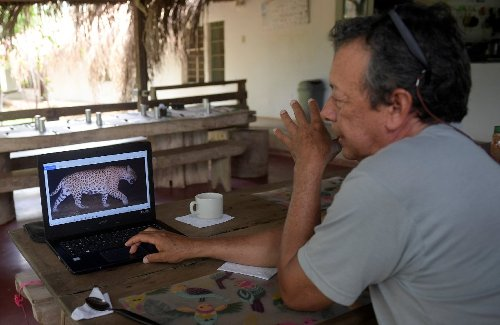 In Colombia, cattle farmer declares truce with jaguar