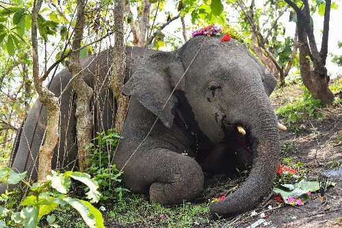 India probes death of 18 elephants 'hit by lightning'