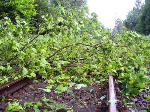 Sturm in NRW: Bahn bereitet sich vor – Verspätungen und Ausfälle möglich