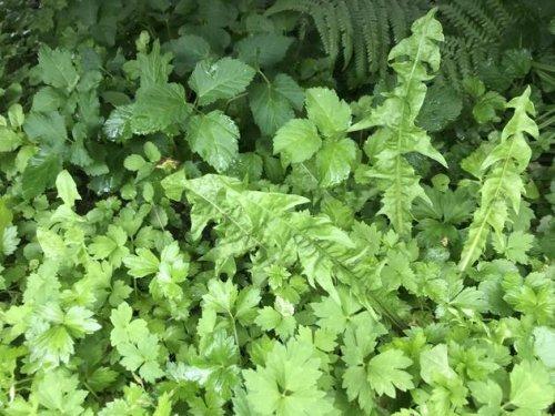 Unkraut vernichten: Lästige Pflanzen komplett aus dem Garten entfernen