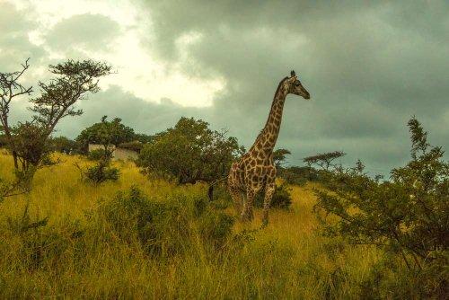 Thanda Safari – Luxury Glamping in the South Africa Bush