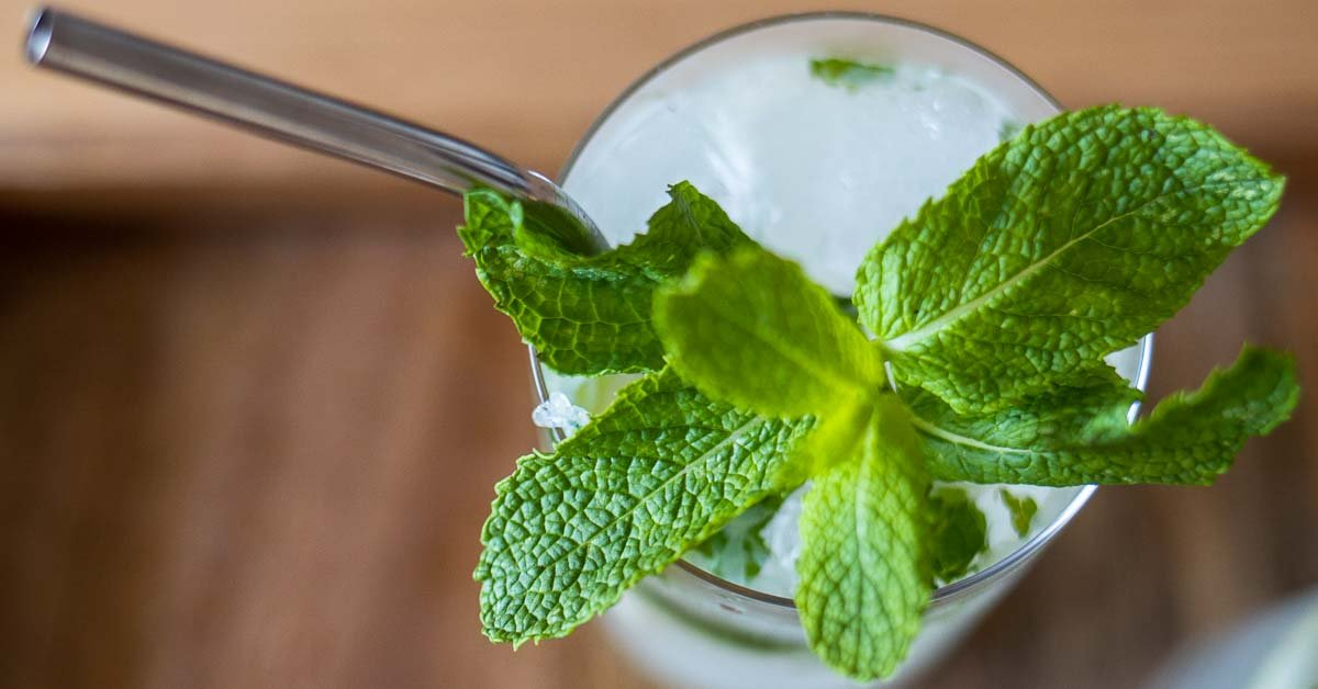 Bacardi Mojito Recipe for a Taste of Cuba at Home