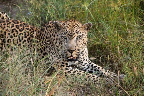 Ultimate African Luxury Safari at &Beyond Kirkman's Kamp