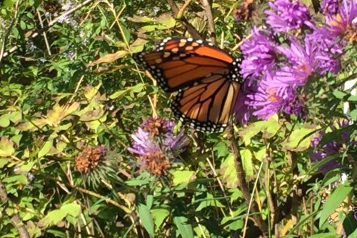 DIY Butterfly Garden: Create an Oasis in Your Yard With a Butterfly Garden