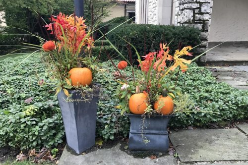 Harvest Flower Pots: How to Transition Your Container Gardens From Summer to Festive Fall