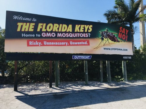 Coalition Against GMO Mosquito Condemns Release of Genetically Engineered Mosquitoes