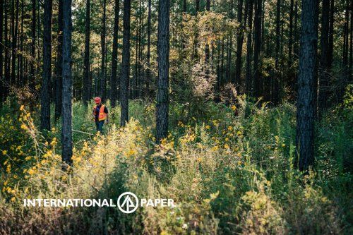 """International Paper Among First to Join New WWF """"Forests Forward"""" Program"""