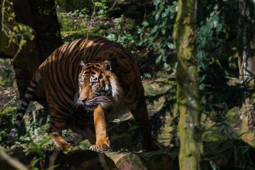 7 Reasons to Visit Edinburgh Zoo