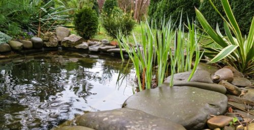What Is A Rain Garden? And How To Add One To Your Yard