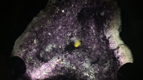 Why is there a stuffed animal in a gem at the Denver Museum of Nature and Science?