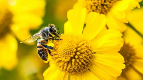 Why honeybees may be key to understanding alcohol addiction