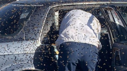 Firefighter saves man in car swarmed with thousands of bees