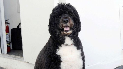 Bo, the Obama family dog, has died