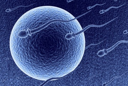 Going Through IVF? 5 Surprises To Watch Out For When Signing Consent Forms.