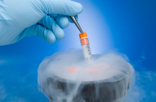 Embryo Wars: Beware Of Reliance On Fertility Clinic Forms