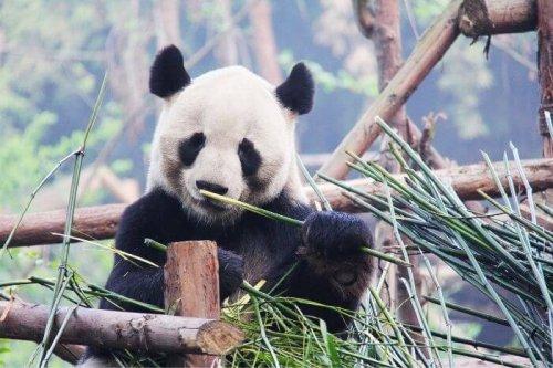 27 Panda Gifts For Panda Lovers