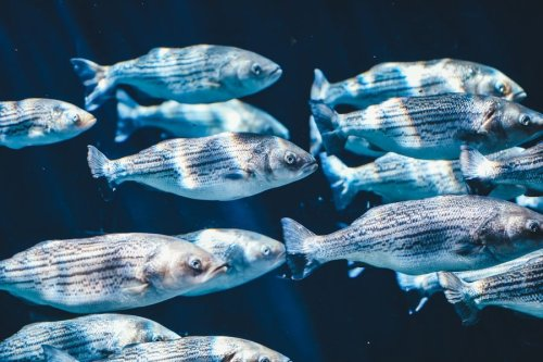 Changing Our Built Environment Alters Our Health – A Fish Tale