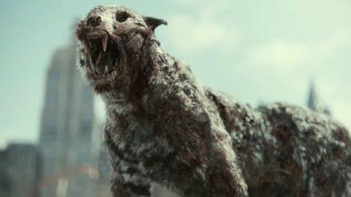 'Ejército de los muertos': Zack Snyder explica por qué los pájaros son los únicos inmunes al virus zombie