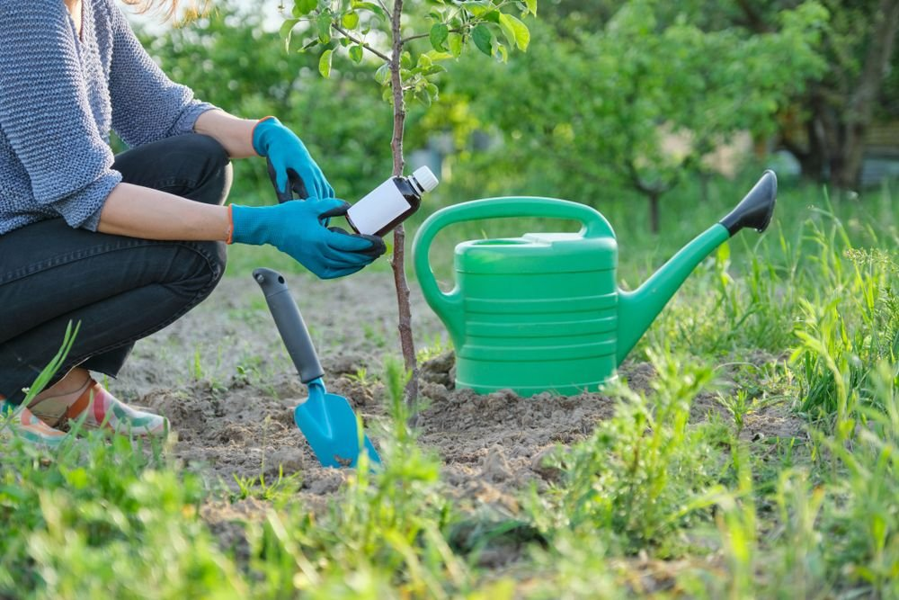 Tips for Healthy Organic Pest-Free Gardening