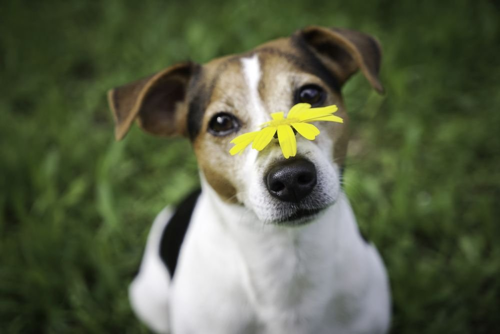 Dog Allergies: Things Every Owner Should Know - ActiveBeat
