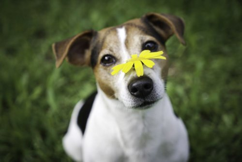 Dog Allergies: Things Every Owner Should Know