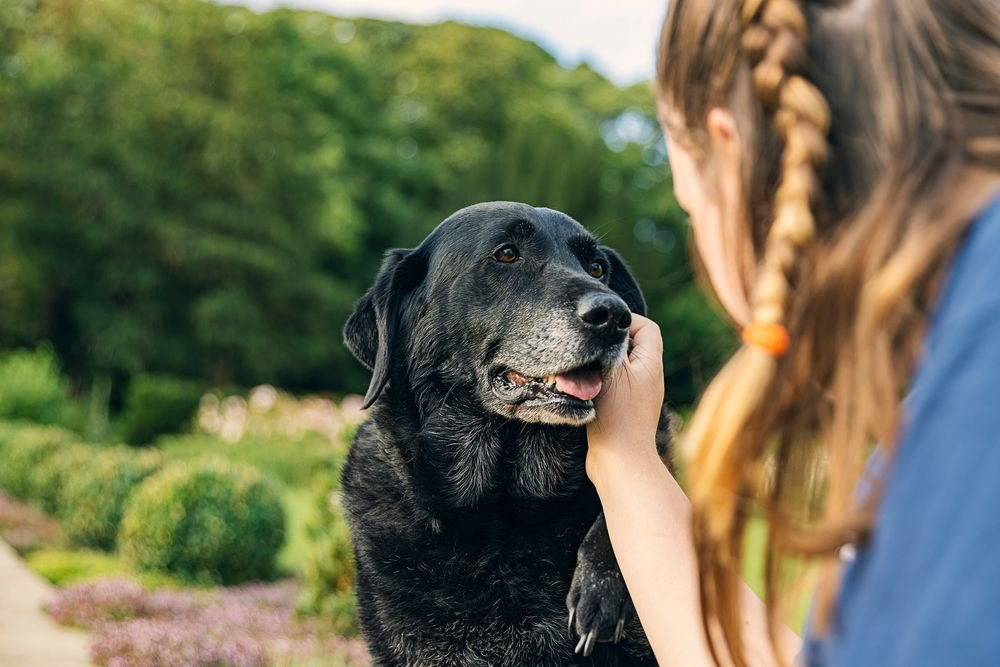 Common Ailments for Aging Dogs
