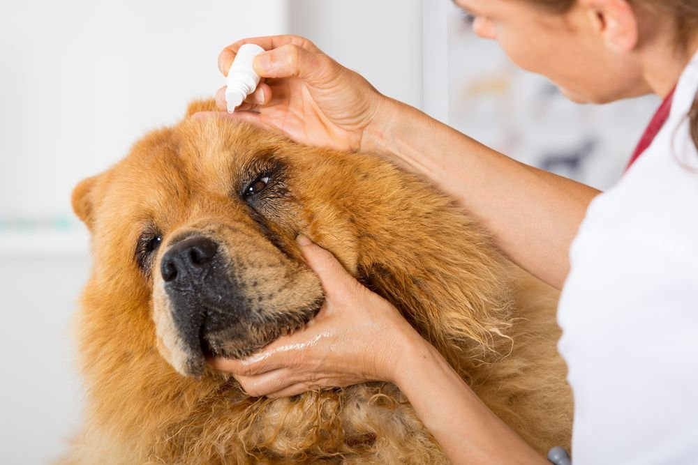 Eye Infection in Dogs: Symptoms and Treatments - ActiveBeat