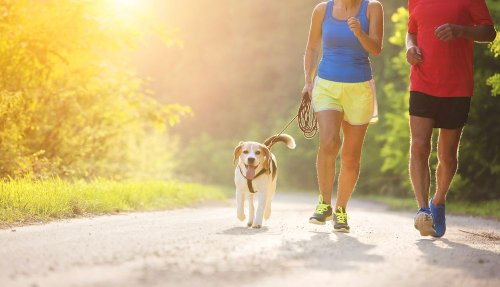 Tips For Summer Exercise With Your Dog