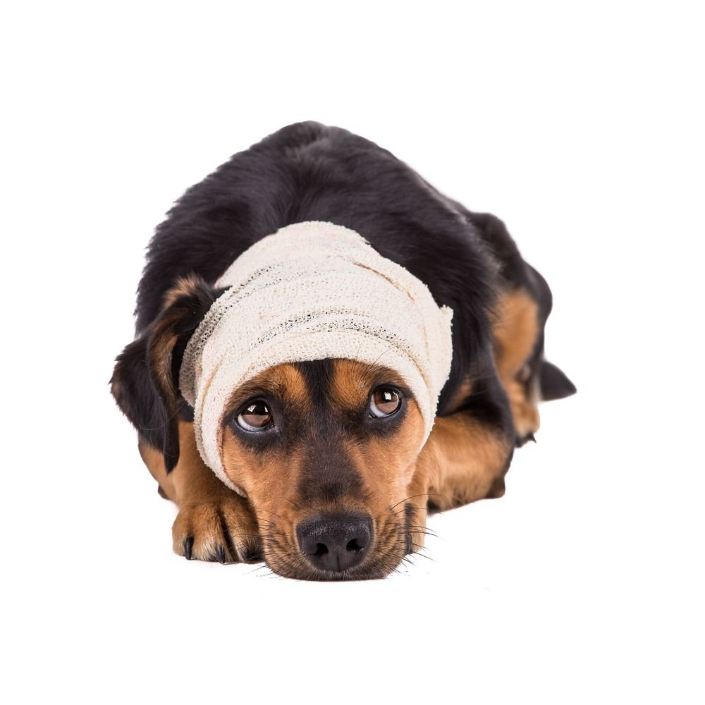 Brain Tumor in Dogs: Symptoms and Treatment Options - ActiveBeat