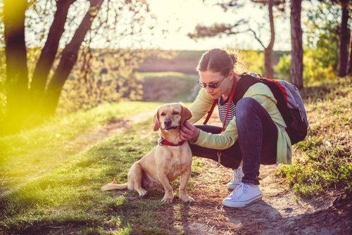 Flea and Tick Prevention Tips