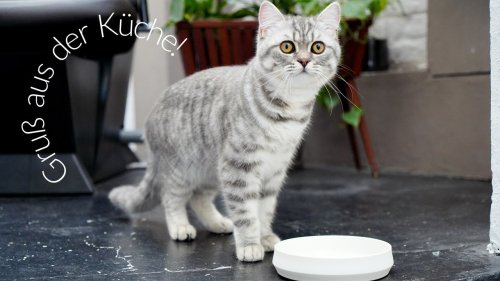 LucyBalu macht Futternäpfe für (Nasch-)katzen mit Stil – jetzt bei AD