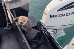 Discover sea otter