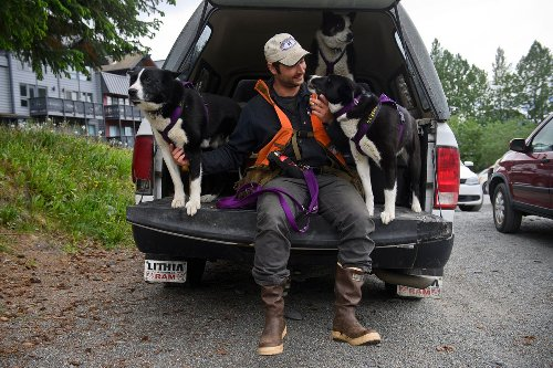 Dogs put to work in Girdwood in attempt to reduce bear conflicts with residents